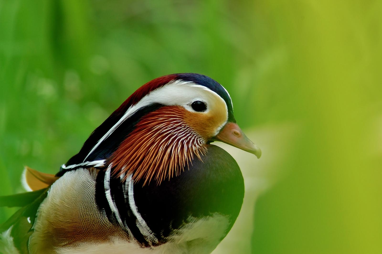 A bird's silent song