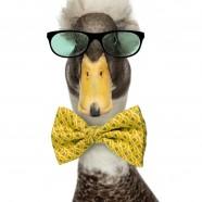 If it quacks, it's a duck